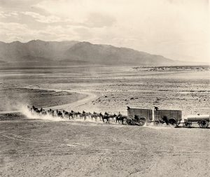 freight wagons pulled by many teams of mules in an open desert landscape