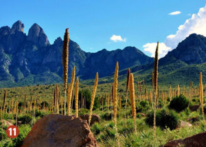 Cactus Scenic