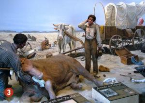 California Trail museum display