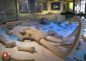 Dinosaur fossils in museum